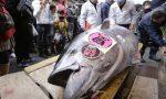 Vì sao cá ngừ ở Nhật có giá triệu đô là bình thường